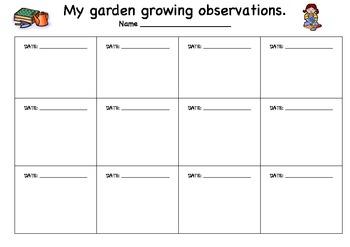 Plant Growing Observation Sheet By Kristy Myatt