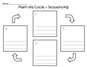 Plant Life Cycle  Sequence by Jacobs Teaching Resources | TpT