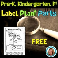 Plants - Label the Plant Parts Freebie Worksheet