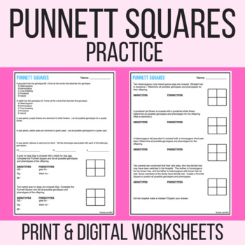 Punnett Square Practice Or Quiz By Stem Strength