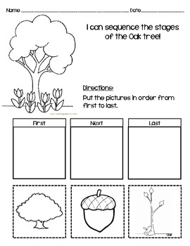 Sequencing Worksheet For Oak Tree By Messy Teaching