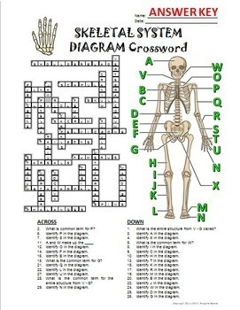 Skeletal System Crossword with Diagram {Editable} by
