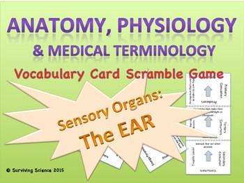 The Ear: Anatomy & Medical Terminology Vocabulary Scramble ...