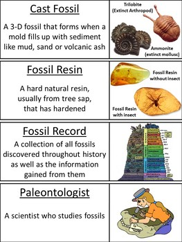 Types Of Fossils Word Wall Cards By Science Spot