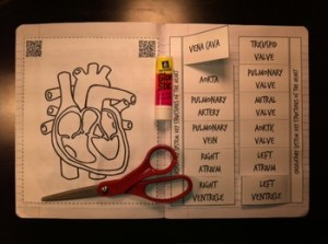 circulatory body system heart coloring foldable