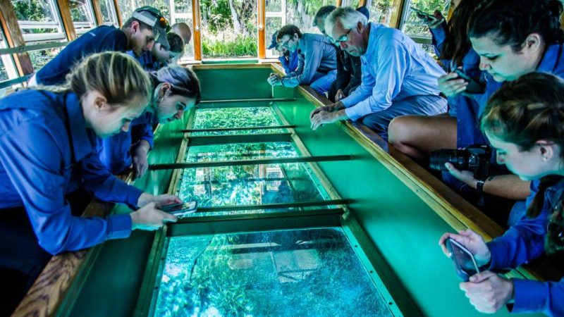 Students on the glass bottom boat