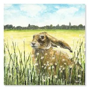 Daisy Hare in a field of wheat with tiny daisyies infront of the hare looking into the distance