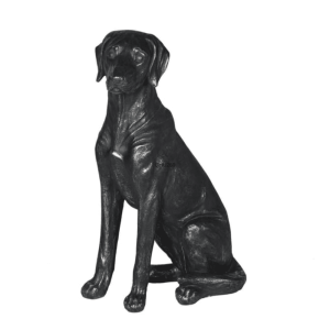 TEA397 sitting black Labrador