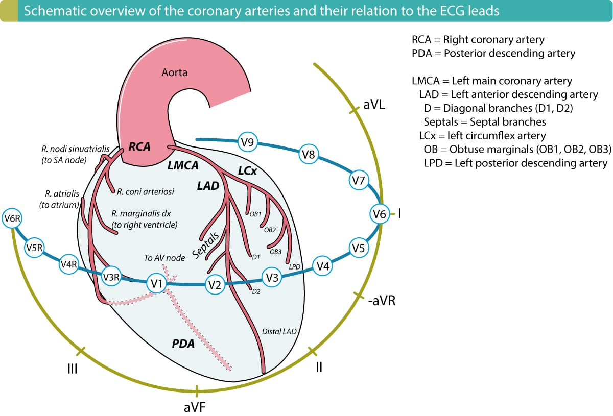 Introduction To Coronary Artery Disease Ischemic Heart