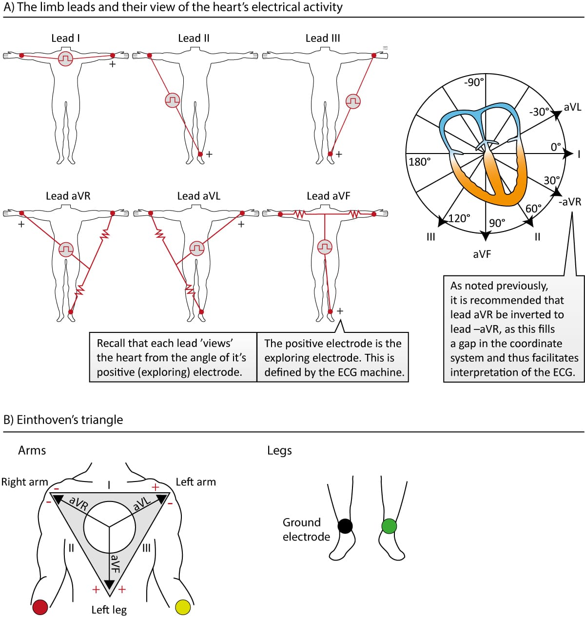 The Ecg Leads Electrodes Limb Leads Chest Precordial