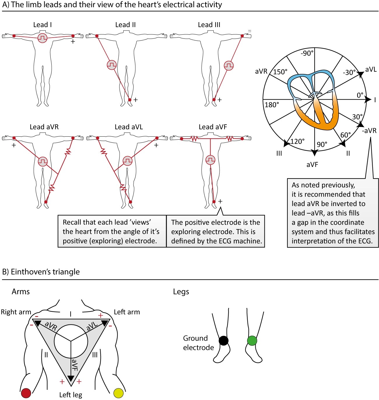 The Ecg Leads Electrodes Limb Leads Chest Precordial Leads 12 Lead Ecg Ekg Ecg Learning