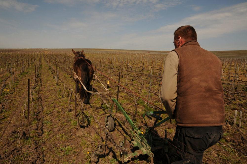 Travail Cheval Champagne Hubert Paulet