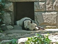 zoo_w_pekinie_5
