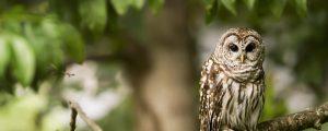 owl e1510585717675