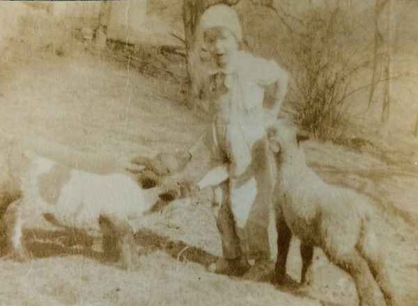 Betty feeding three lambs at once.