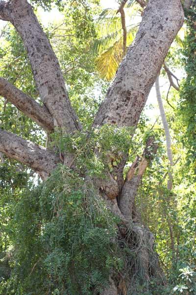treeIMG_7416 2