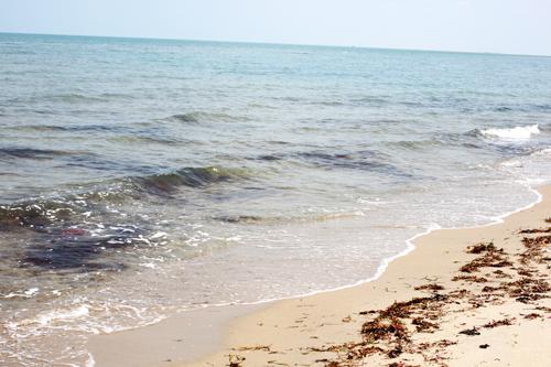 the shore of rameshwaramIMG_7508