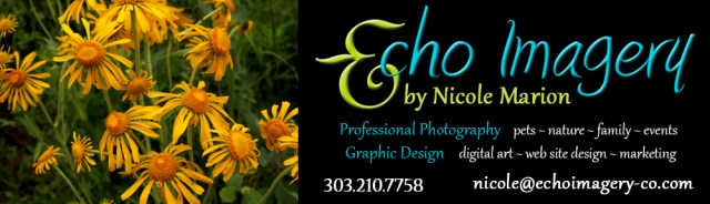 2016 Page Header-Wildflowers-New