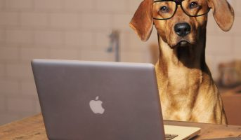 dog-using-laptop-computer1-1200x700