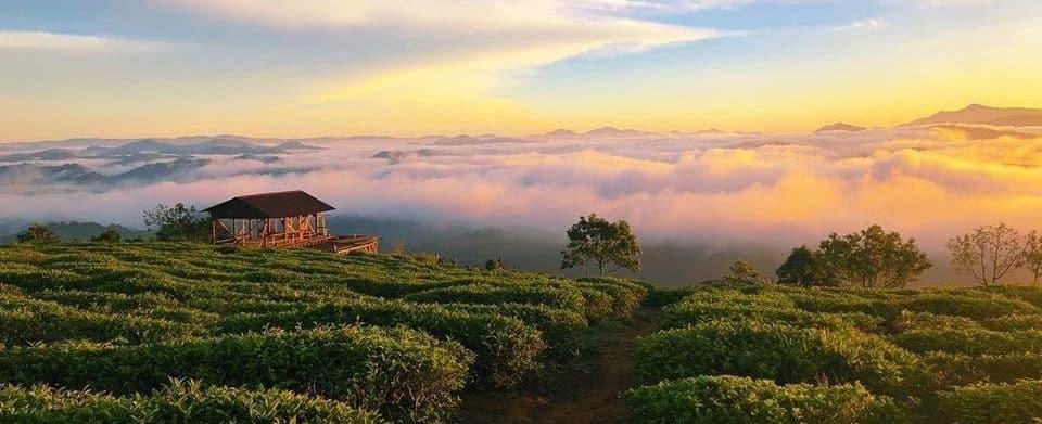 Le Dalat Cloud coffee Estate