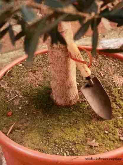 petite pelle de jardin écolo à main fabriqué en hollande en frêne et fer forgé - outils de jardin et potager enfant