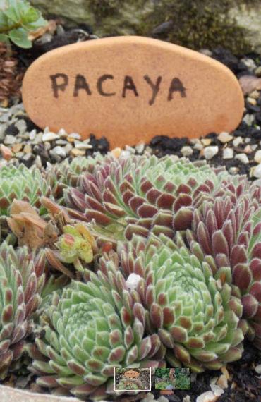 box jardinage bio été : étiquette en terre cuite pour écrire le nom des plantes
