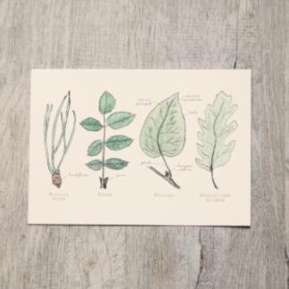 contenu box jardinage de balcon : illustration herbier par leobizard, feuilles arbres dessinées sur papier de qualité, impression fontainbleau / échoppe végétale