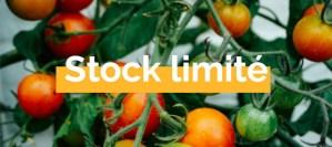 coffret graines de tomates cerises bios pour balcon potager