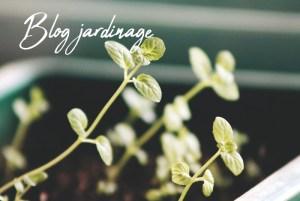 Blog jardinage pour les conseils arrosage de plantes en pot, planter des tomates au potager de balcon, choix des graines et taille des pots