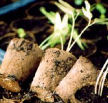 kit semis terreau et pot biodegradable fertilpot