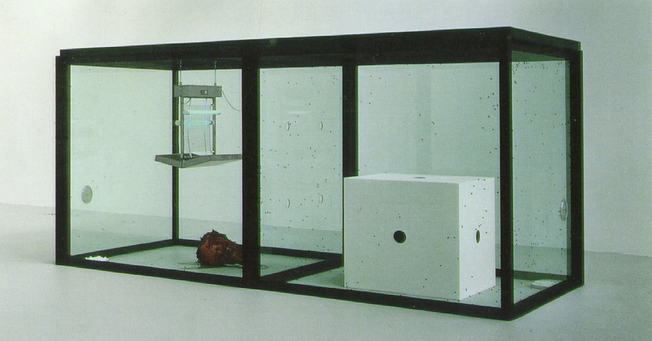 A thousand years Damien Hirst