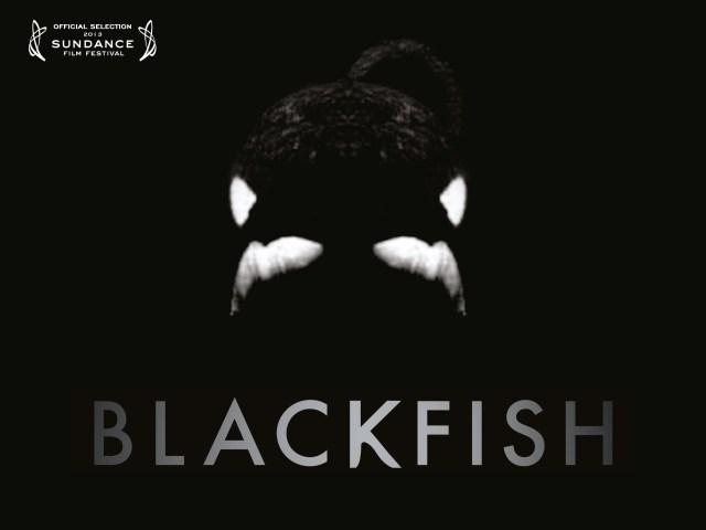 Affiche Blackfish l'orque tueuse