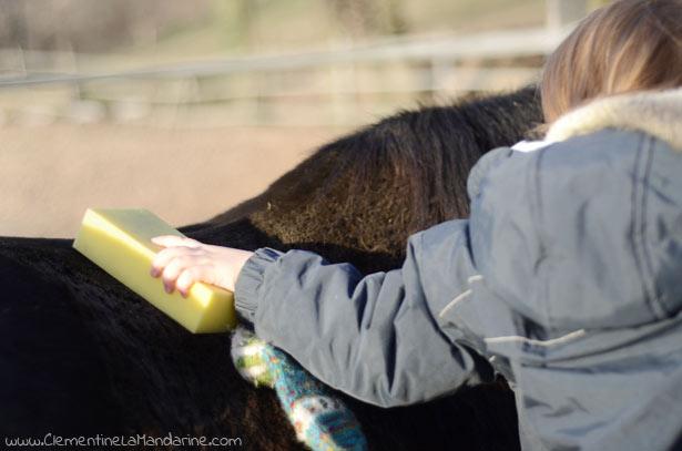 mon-cheval-est-il-heureux-clementine-la-mandarine