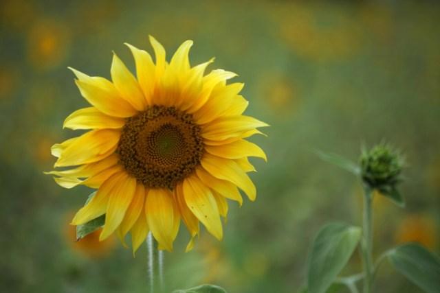 summer-sun-yellow-spring-large