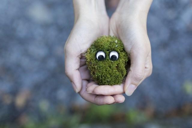 Moss hands source pexels