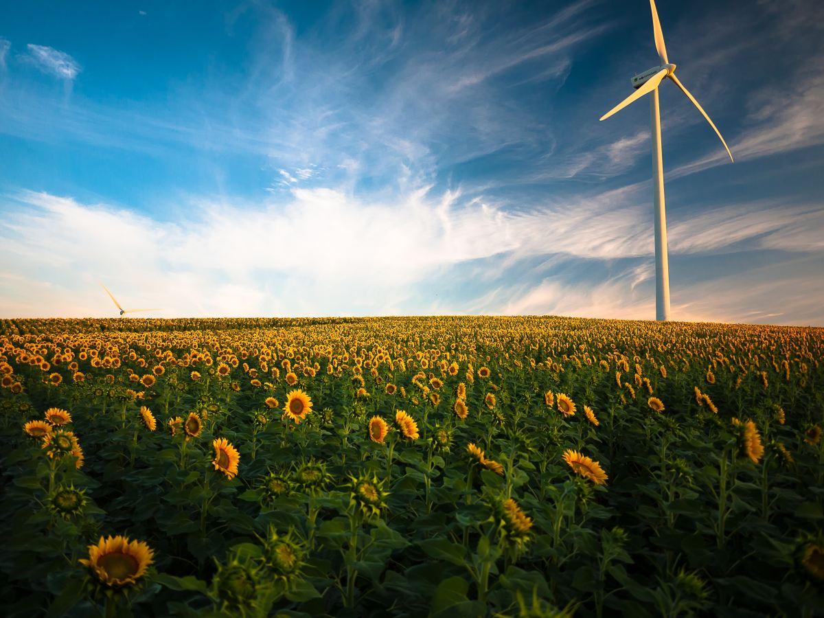 Choisir un fournisseur d'énergie renouvelable avec Hello Watt