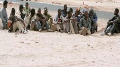 صورة رحلة إلى الجزائر تنتهي بمأساة..العثور على جثة 20 طفلاً في الصحراء