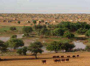 صورة موريتانيا: محليون يبحثون سبل تطوير واقع الرعي والبيطرة
