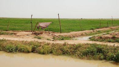 صورة الأمطار الغزيرة تتسب في ضياع ميئات الأطنان من الأرز في فم لكليتة