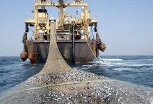 صورة مشكلة الصيد في موريتانيا.. توضيح للتاريخ وبالأرقام/ عالي محمد ولد أبنو