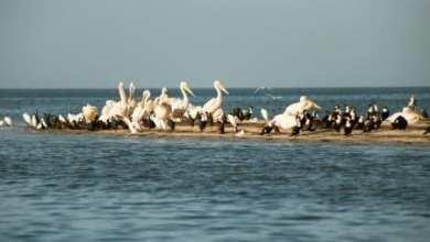 صورة موريتانيا : انفلونزا الطيور تتسبب في نفوق أعداد كبيرة من الطيور في محمية جاولينغ