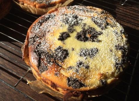 Cheesecake-mit-Mohn-IMG_2682