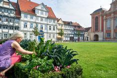 Mangold ernten im Gemüsebeet in Wolfenbüttel