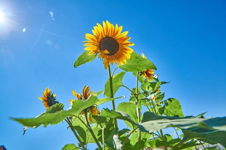 Das ideale Sommerwetter: Keine Wolken am Himmel und den ganzen Tag Sonnenschein.
