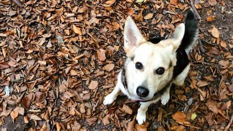 »Steh«-»Sitz«-»Platz« - Ganzkörpertraining für euren Hund.