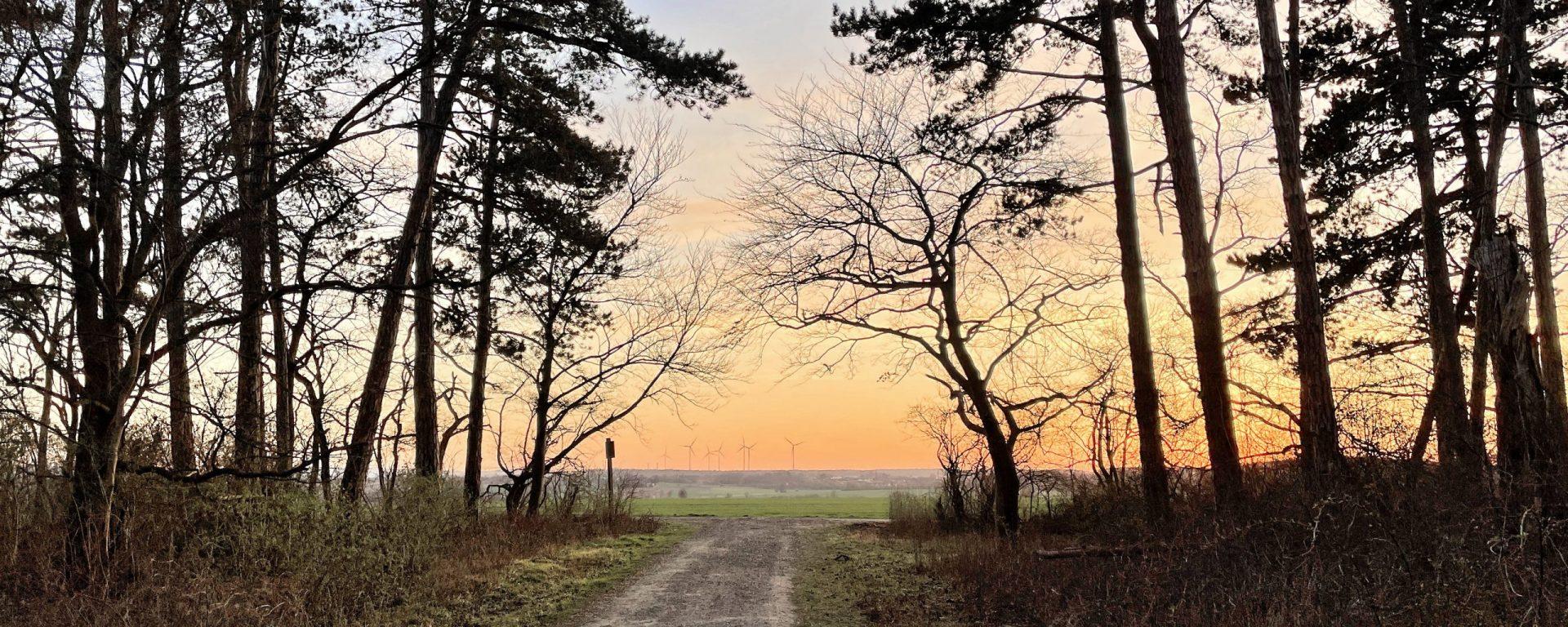 Blick aus dem Wald über ein Feld im Abendlicht