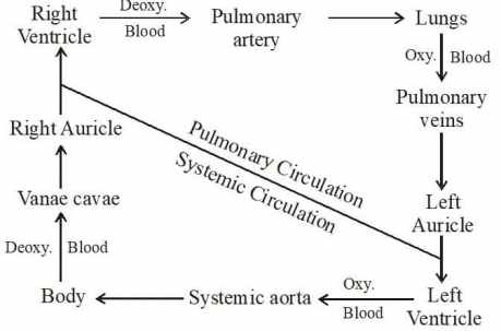 path of blood flow