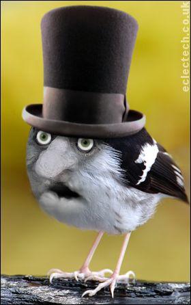 odd bird in a top hat