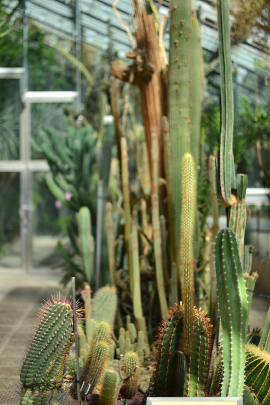 Succulents, Madrid