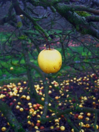 Haddenham Orchard